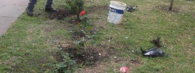 plantacion de rosas