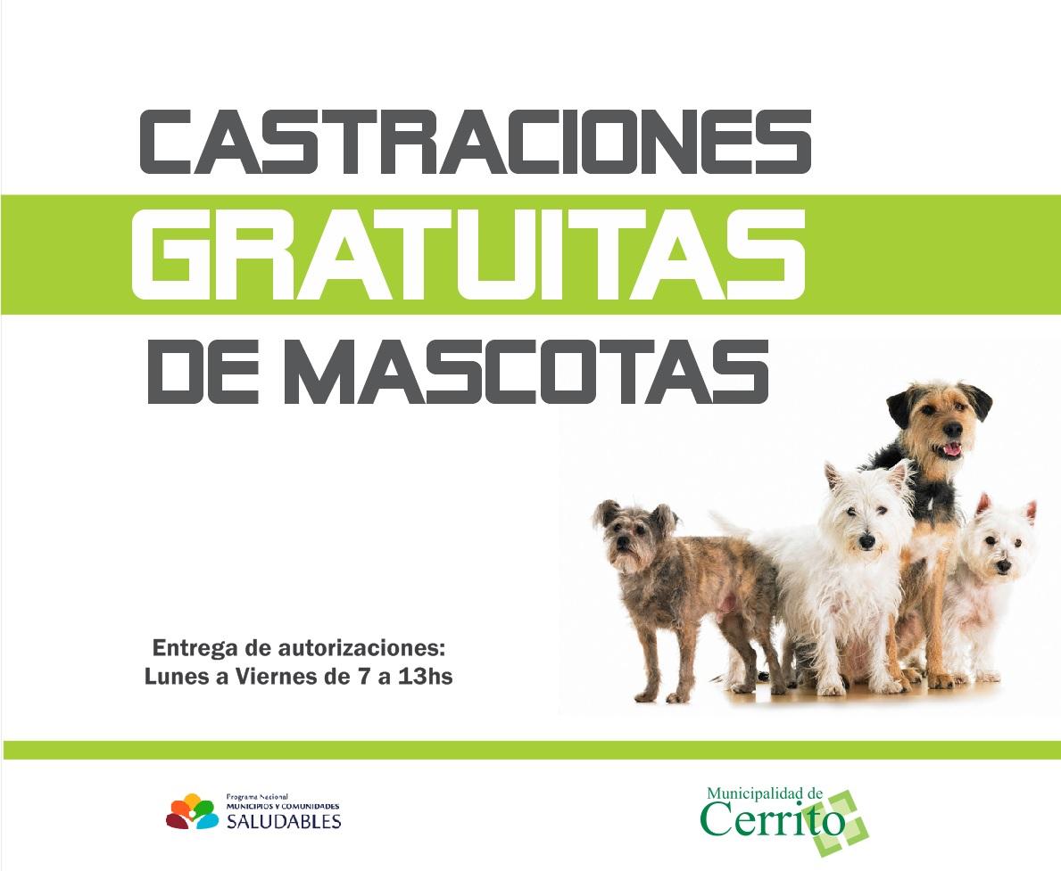 Tenencia responsable y castración de mascotas