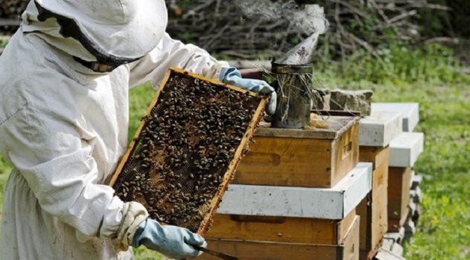 Los apicultores deben mantener actualizada su inscripción en el Renapa